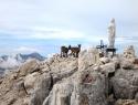 Marija s spremstvom na vrhu Viša, 2666 m.